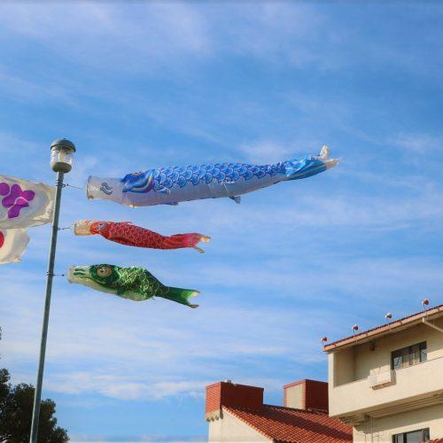 終了しました:鯉のぼり飾っています