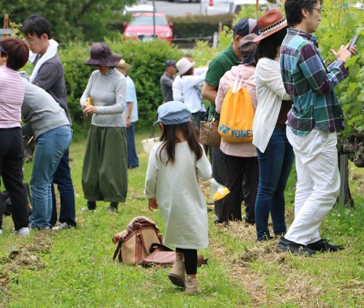 新型コロナウイルス感染拡大に伴う「神戸ワインオーナーズクラブ」会員募集停止のお知らせ