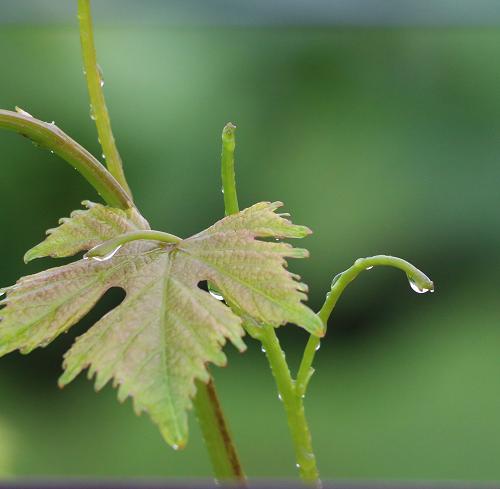雨の日フェア≪ワインショップ≫